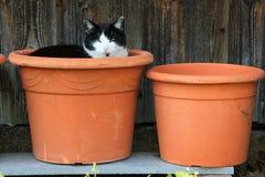 Pot cat Stock Photos