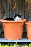 Pot cat Royalty Free Stock Photo