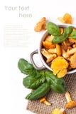 Pot of  chanterelles Stock Photo