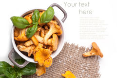 Pot of  chanterelles Royalty Free Stock Images