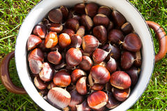 Pot of chestnut royalty free stock photos
