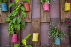 Pot coloré de boîte en aluminium de collection sur le mur en bois photo stock