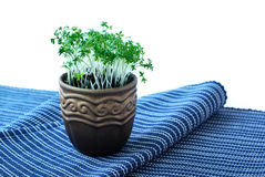 POT con crescione Immagini Stock