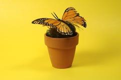 POT con la farfalla Immagine Stock