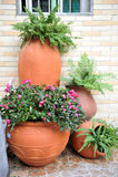 POT con le piante Fotografia Stock