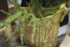 Pot cray de plante verte de conception Image libre de droits