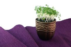 Pot with cress Royalty Free Stock Photography