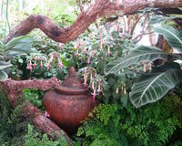 Pot d'argile caché sous une grande branche dans un jardin Photographie stock