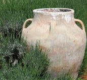 Pot dans l'herbe verte Images libres de droits
