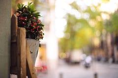 Pot dans un devanture de magasin en bois au-dessus d'un fond brouillé Image stock