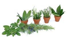 Pot de diverses herbes Image stock