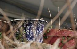 Pot de fleur photographie stock libre de droits