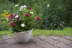 Pot de fleur avec des fleurs sur le patio en pierre Images stock