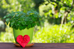 Pot de fleur avec la menthe et le coeur aromatiques de l'origami Buisson en bon état sur un fond vert naturel Cadeau romantique Photographie stock libre de droits