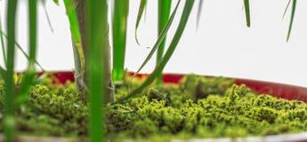 Pot de fleur couvert par mousse verte images libres de droits