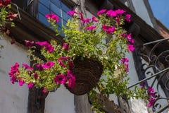 Pot de fleur de Cantorbéry Photographie stock libre de droits