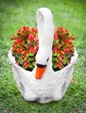 Pot de fleur de cygne sur l'herbe Images stock