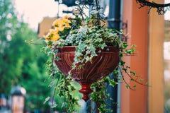 Pot de fleur sur la rue Photos stock
