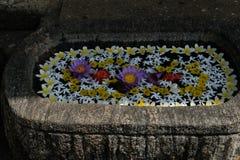 Pot de fleurs à un centre d'ayurveda dans Sri Lanka, Asie image libre de droits
