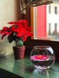 Pot de fleurs avec des fleurs par la fenêtre image stock
