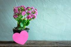 pot de fleurs avec la note de papier de coeur sur la table en bois, backg moderne d'amour Images stock
