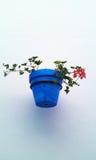 Pot de fleurs bleu sur un mur Image libre de droits