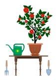 Pot de fleurs dans la boîte et l'instrument d'arrosage de pot pour le jardinage Images libres de droits
