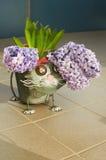 Pot de fleurs drôle de chat Image libre de droits
