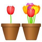 Pot de fleurs et tulipes Photographie stock libre de droits