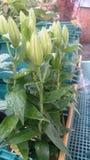 Pot de fleurs de pluie photos libres de droits
