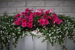 Pot de fleurs rose de bouquet Photographie stock libre de droits