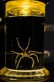 Pot de formaldéhyde avec la créature photo stock