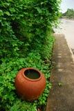 Pot de l'eau et usines s'élevantes Images stock