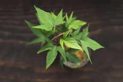 Pot de plante verte Image stock
