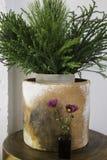 Pot de plante verte de Cray et bouteille de fleur Images libres de droits