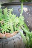 Pot de plante verte dans le jardin Photo libre de droits