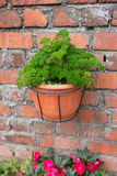 Pot de plante verte sur le mur de briques Photographie stock