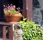 Pot de terre cuite, avec des fleurs Image stock