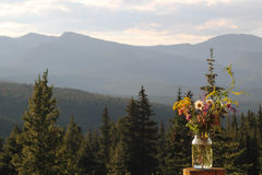 Pot de Wildflower photographie stock