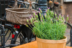 Pot with decorative plant on the table of outdoor street cafe Royalty Free Stock Photo