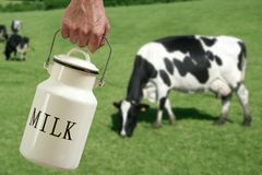POT del latte del prato della mano del coltivatore della mucca Fotografia Stock