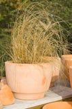 POT dell'erba secca Fotografia Stock