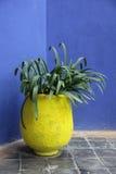 POT della pianta Fotografia Stock Libera da Diritti