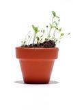 POT della pianta con la pianta verde Immagine Stock
