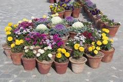POT di fiore Immagine Stock