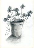 POT di fiore Fotografia Stock Libera da Diritti