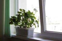 POT di fiore dell'ufficio Fotografia Stock Libera da Diritti