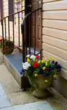 POT di fiore della porta Immagine Stock Libera da Diritti