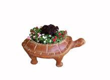 POT di fiore della tartaruga immagini stock libere da diritti