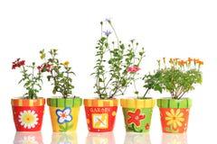 POT di fiore graziosi Immagine Stock